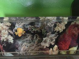 Продам аквариум с крышкой и подсветкой на 55 литров прямоугольный
