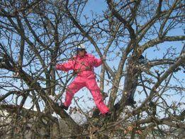 Спилить дерево Обрезка сада в Харькове и области