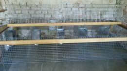 Клітки з сітки для кролів