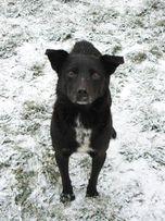 Pascal - smutny i zrezygnowany pies któremu spalili dom - do adopcji