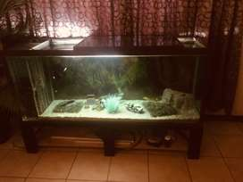 1.7m Self Maintaining Fish tank