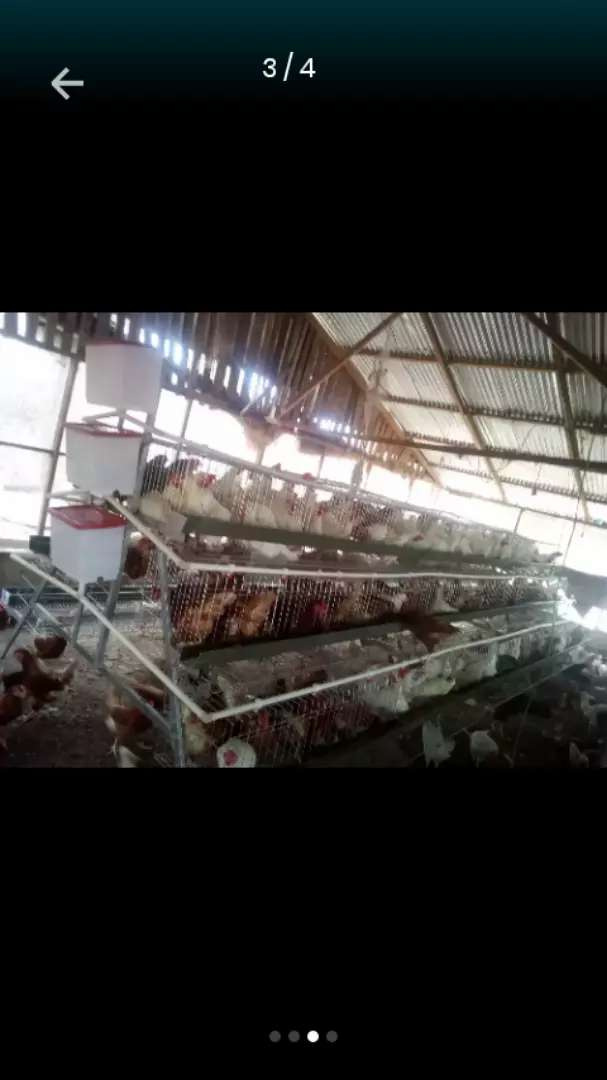 Poultry cage system 0