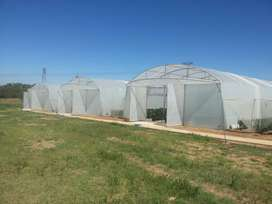 Galvanized Greenhouse Tunnels for Sale