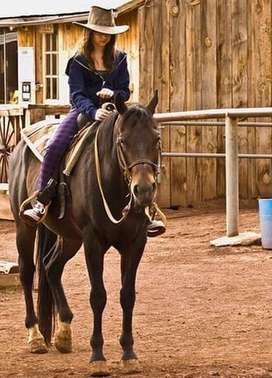 Looking for a rideable horse R5000/R6000 max