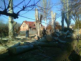 Бензопила Снос спил деревьев любой сложности, аварийные. Автовышка