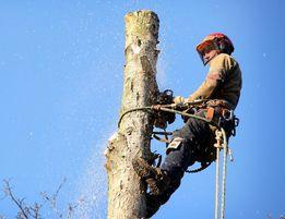 Удаление деревьев ! Кронирование ! Арбористика !