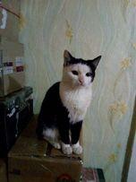 отдам чернобелого котенка, девочка, 7 месяцев