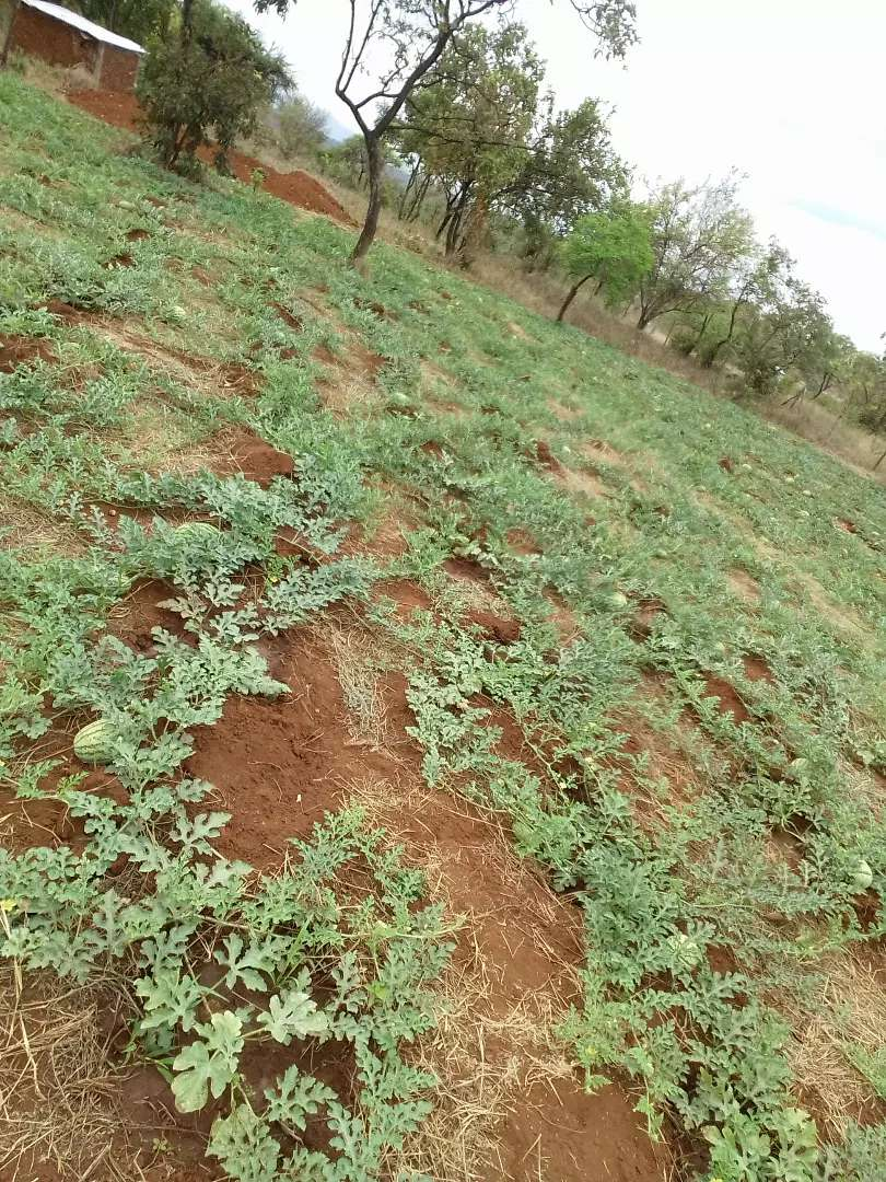 Half an acre plot  in embu for sale 0