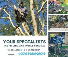 DION TREE FELLING AND RUBBLE REMOVAL