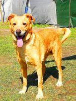 KARMEL - kochany, oddany psiak szuka domu
