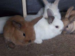карликовые хомячки и кролики