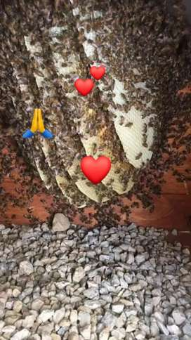 Bee and wasp nest removal all areas in cape