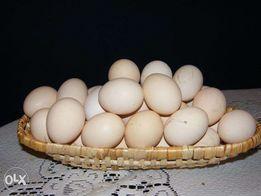 Jajka, jaja wiejskie. Od szczęśliwych kur.