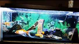 3foot fish tank as is R2500 neg