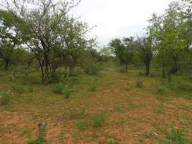 Build Your Bushveld Home on this Beautiful 10 000sqm Stand