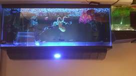 2x Fish tanks for sale