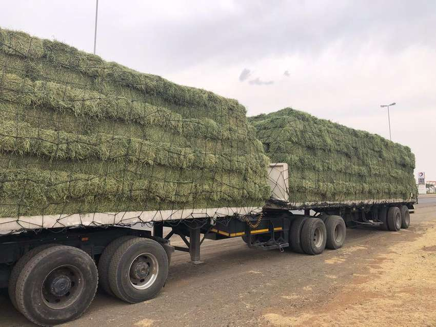 Lusern and Teff for sale