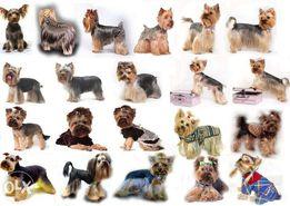 Профессиональная стрижка грумминг собак и кошек