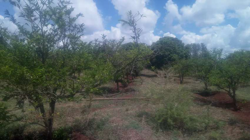 Fertile Agricultural Land to LEASE 0
