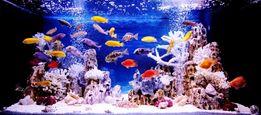 Обслуживание пресноводных аквариумов и террариумов