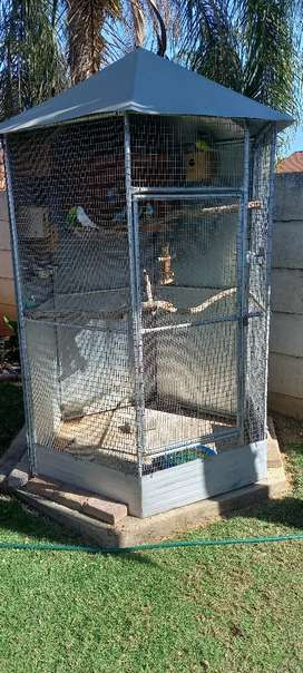 Bird cage with budgies