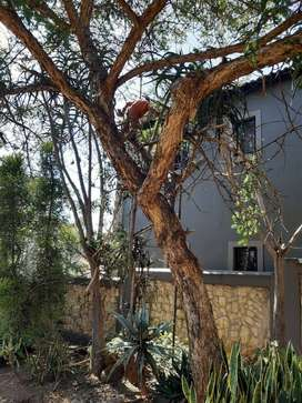 Alpha boomsloping/tree felling solutions.