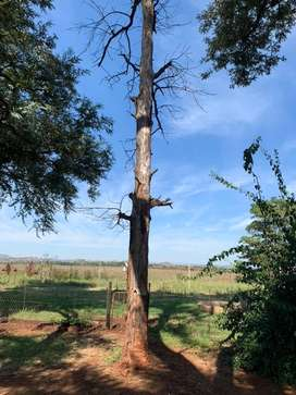Tree felling service required