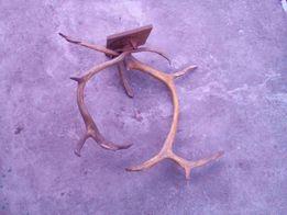 Продам рога оленя или оленьи рога Цену снизил
