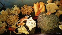 Коллекцию кораллов и ракушек