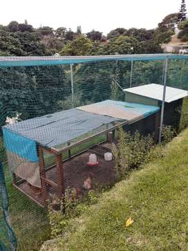 Chicken Coupe, Run and Laying Hens for Sale