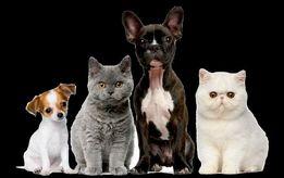КАСТРАЦИЯ, СТЕРИЛИЗАЦИЯ кошек и собак с выездом на дом.
