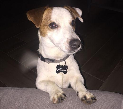 Адресник для собаки с гравировкой (купить жетон медальон на ошейник) Винница - изображение 2