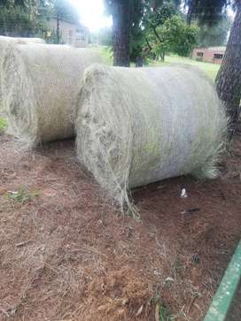 Eragrostis bales for sale