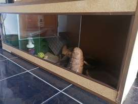 Reptile Cage with Heater lights (3)