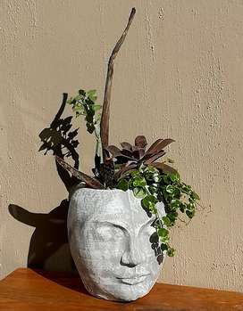 Stunning choice of potted plants for sale . Pg 2.Bloubergsands
