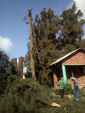 TREE FELLING,INSTANT LAWN AND YARD CLEANING