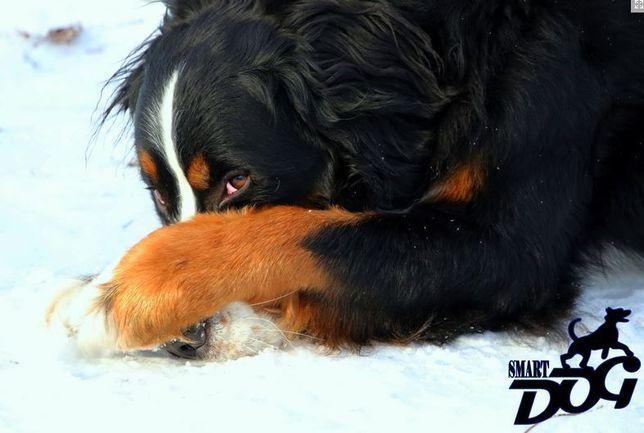 Дрессировка собак в Запорожье - команда SmartDog Запорожье - изображение 3