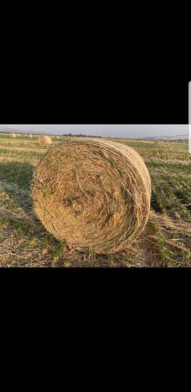 Oat Hay Bales for Sale