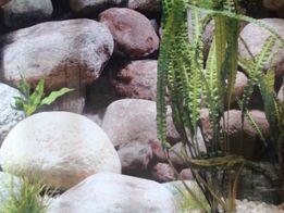 Folia do terrarium