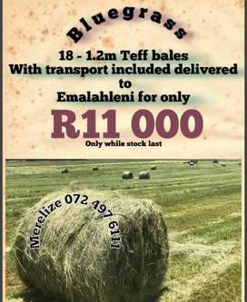 18 Teff bales with Transport to Emalahleni