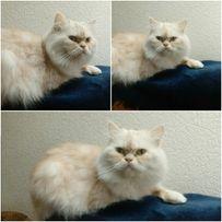 Кіт на вязку