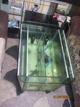 Fish tank as a Coffee table