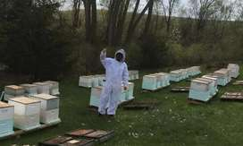 BEES,WASPS,BEEKEEPERS IN GAUTENG,REMOVE BEES SAFELY