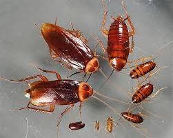 Тараканы не беда.Тараканов травлю я всегда.Потравить,уничтожить .