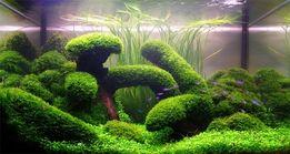 Чистка и уход за аквариумами