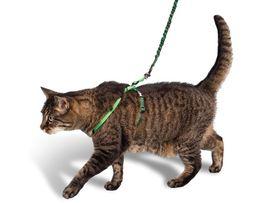 Поводок+шлейка для собаки,кошки