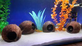 Кокосовый домик грот кокос укрытие в аквариум для рыб цихлид Лелеупи