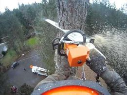 Спил удаление аварийных деревьев, кронировка, каблинг, чистка, распил