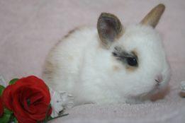 Бронируем мини крольчат