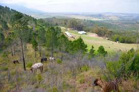 Equestrian Farm, 103 Hectares, 2 houses, 10 stables, tack room, arenas